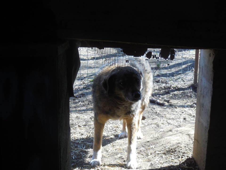 TIPPI - Très jolie femelle X berger poils mi-longs - née en 2009 - parrainée par Edni94 - R-SC- SOS - Page 3 53879110