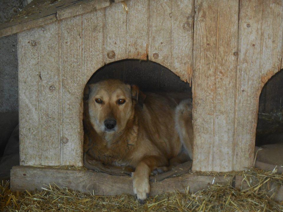 BAILEYS, née en 2011, sauvée de l'équarrissage - parrainée par Nathalie -SOS-R-SC - Page 3 54192510