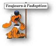 choupy - CHOUPY mâle né en Juin 2019 portée de 5 trouvés par Lénuta en septembre 2019- marrainé par Réglisse -R- 542