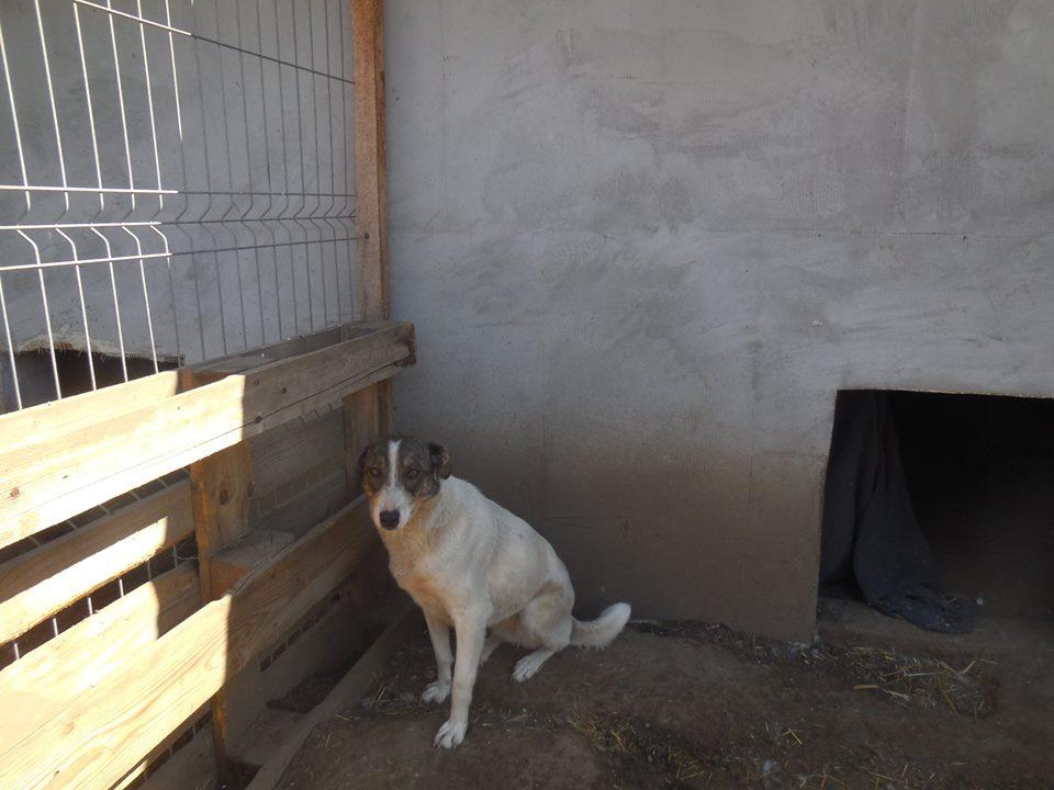 IRIS, née en 2015 - sauvée de la rue - Parrainée par Perdita -  OANA -SC-R-SOS- - Page 2 54348310