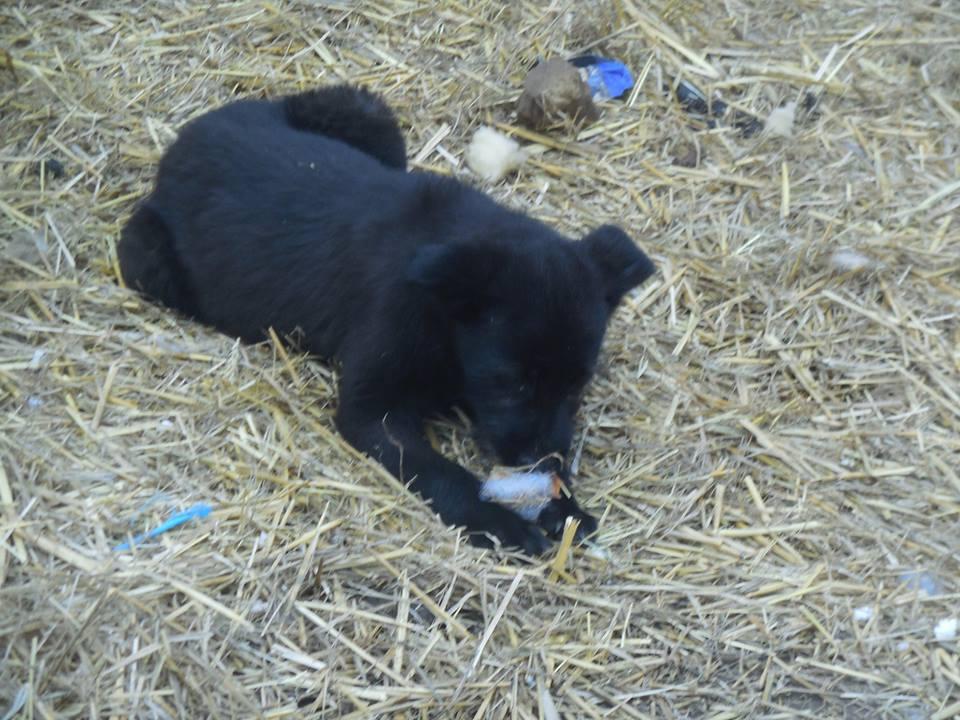 Babouchka née le23/11/2017 - femelle petite taille sauvée de l'équarrissage En accueil dans le 02 - parrainée par Hashleyalex-R-30MA-SC 54520910