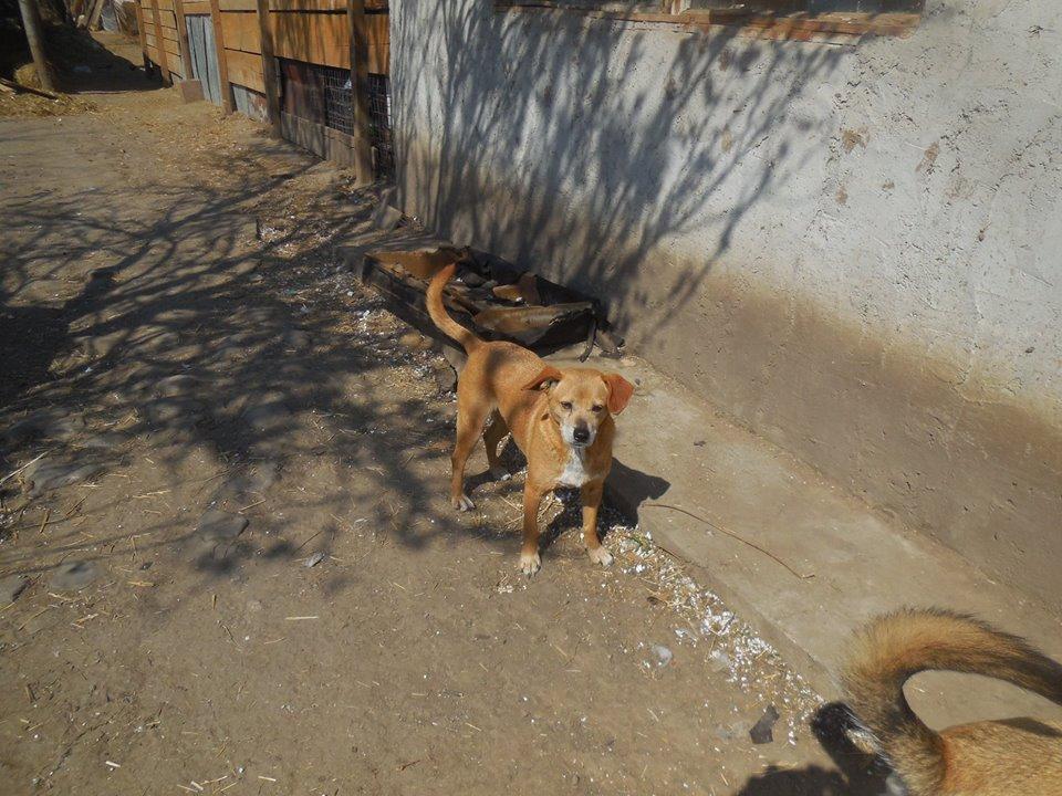 Chiroky - femelle né en 2011 sauvé de l'équarrissage le 18 février 2019 - parrainé par Hashleyalex-R-SOS- 55842710