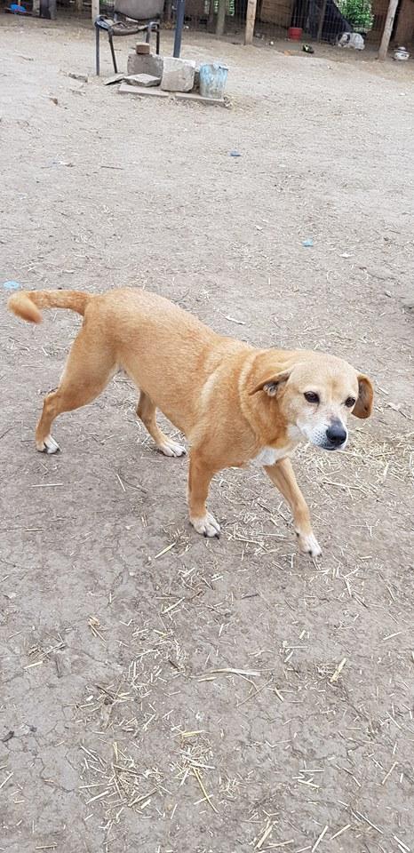 CHIROKY Petite femelle née le 13/12/2010 sauvée de l'équarrissage EN FA DANS LE 60 - parrainé par Hashleyalex-R-SOS-SC 56669514