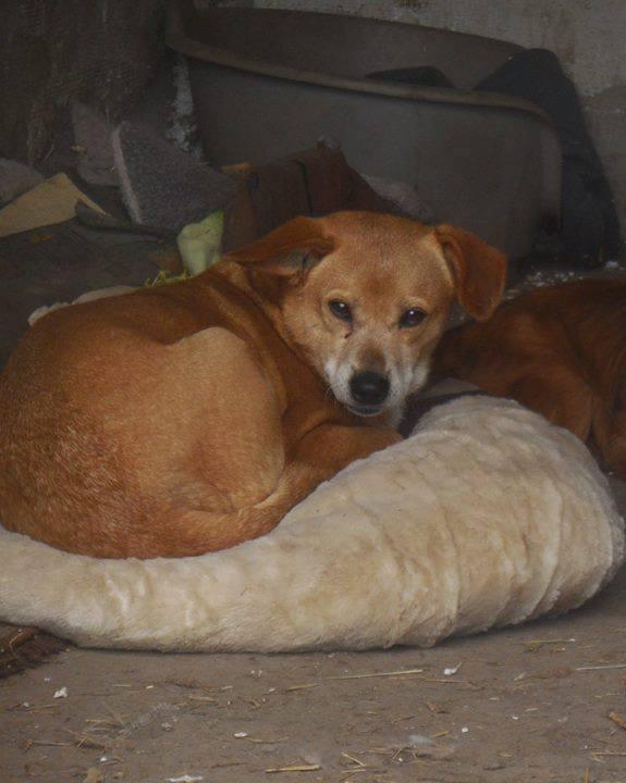 Chiroky - femelle né en 2011 sauvé de l'équarrissage le 18 février 2019 - parrainé par Hashleyalex-R-SOS- 56681311