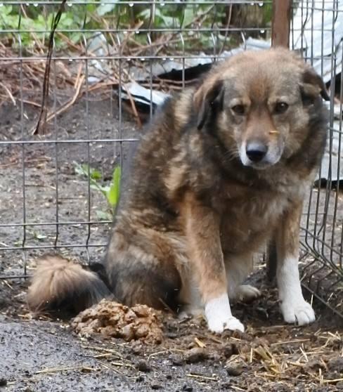 TIPPI - Très jolie femelle X berger poils mi-longs - née en 2009 - parrainée par Edni94 - R-SC- SOS - Page 3 56890312