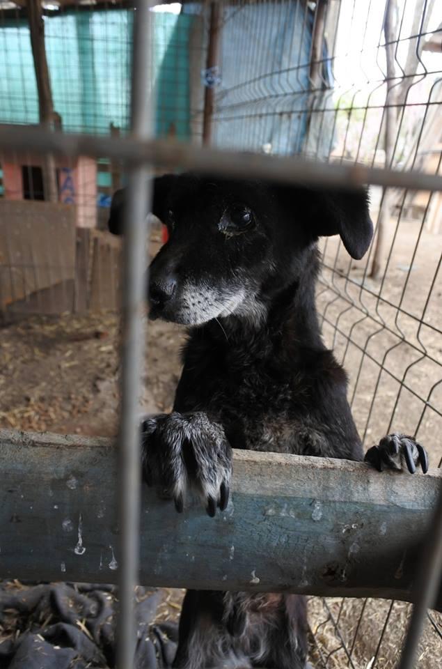BLACHI, ratier, né en 2004 PARRAINE PAR LAIRO - FB - LBC- SOS -SC- AS - Page 8 56890314
