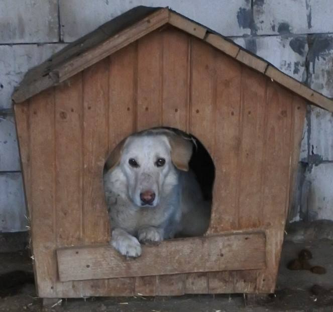 BALANUCH, mâle croisé berger sauvé de Pallady, né en 2009 parrainé par Nathalie Gamblin-SC-R-SOS- - Page 2 56913310