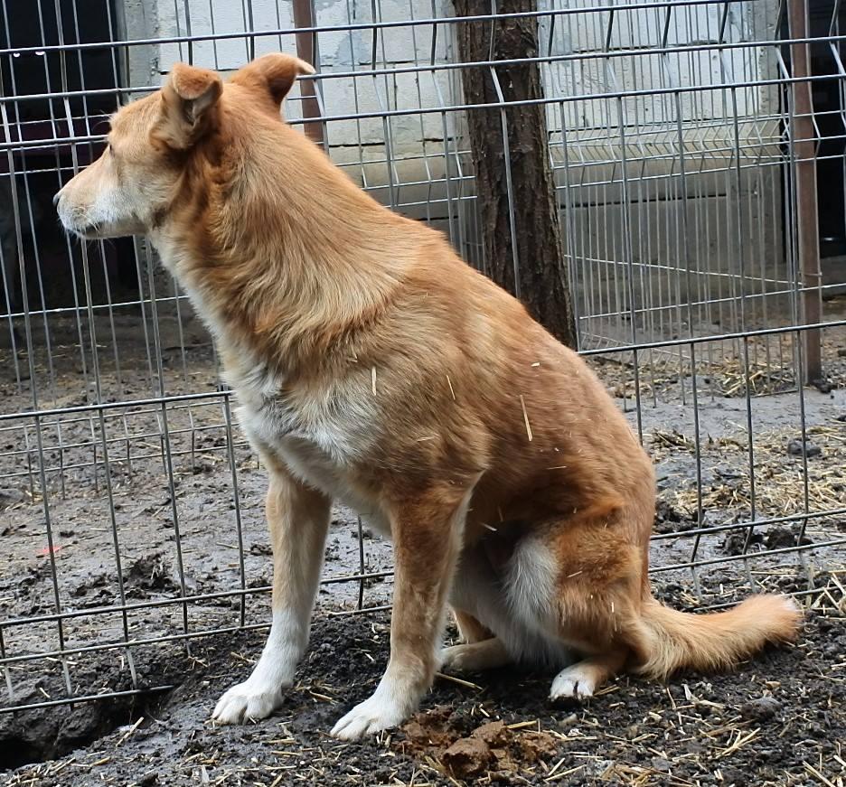 INAYA, femelle berger née en 2014 sauvée de l'equarrissage pour Noel - marrainé par Réglisse -  56917713