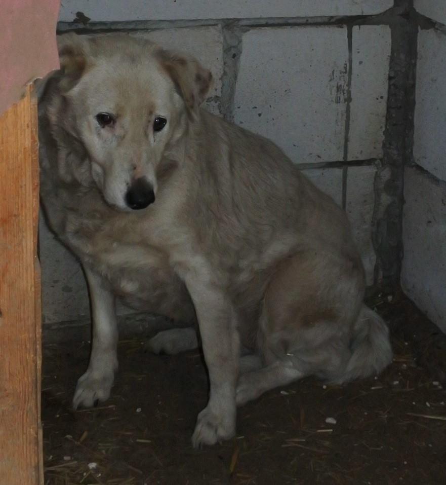 DULCE - Magnifique femelle Blanche - née en 2009 - Parrainée par Samie -SOS-FB-R-SC-  - Page 3 56931713