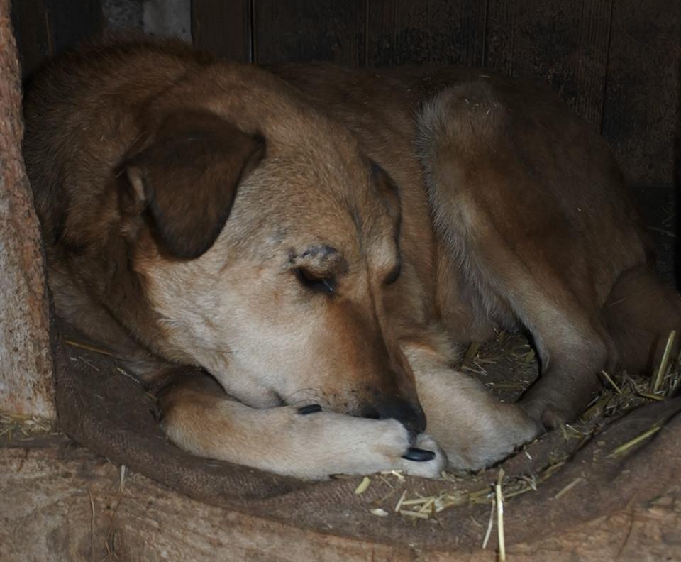 BAILEYS, née en 2011, sauvée de l'équarrissage - parrainée par Nathalie -SOS-R-SC - Page 3 56993913