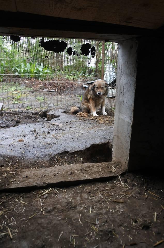 TIPPI - Très jolie femelle X berger poils mi-longs - née en 2009 - parrainée par Edni94 - R-SC- SOS - Page 3 56997516