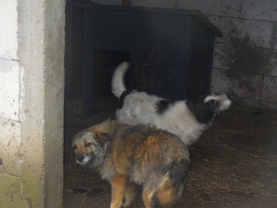 MACUMBA -type petit griffon née en 2010 - marrainée par Yemtsi - R- SOS-SC - Page 3 57013410