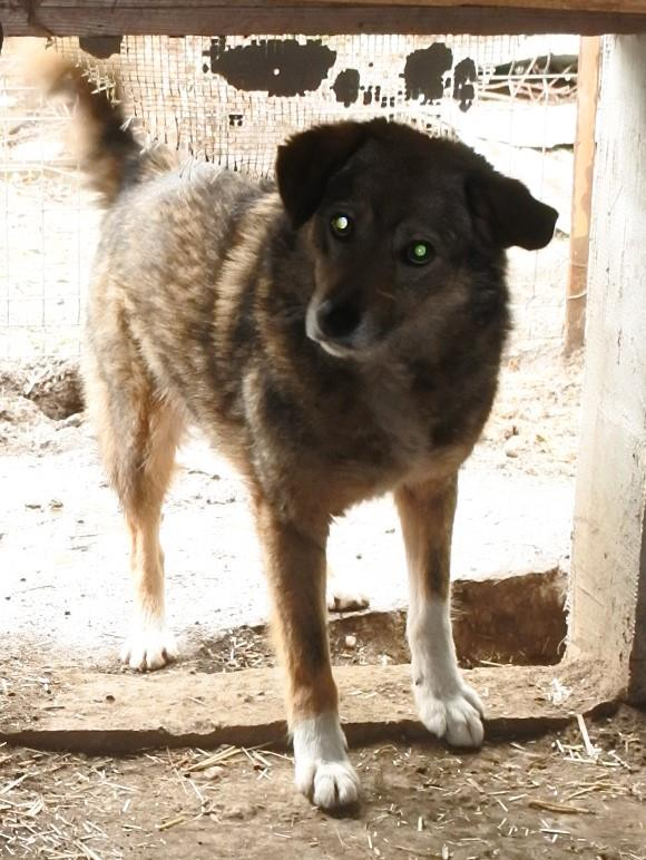 TIPPI - Très jolie femelle X berger poils mi-longs - née en 2009 - parrainée par Edni94 - R-SC- SOS - Page 3 57052313