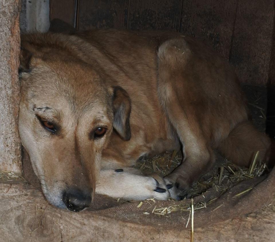 BAILEYS, née en 2011, sauvée de l'équarrissage - parrainée par Nathalie -SOS-R-SC - Page 3 57484710