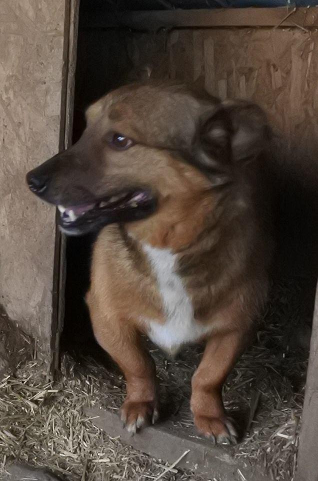 NOUKI , né en 2015 sauvé de l'équarrissage de Bragadiru en Déc 2017- Parrainé par Estelle Vds-R-SC-SOS 57536310