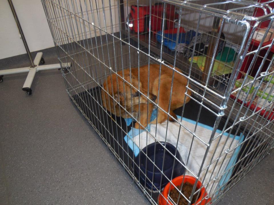 BAILEYS, née en 2011, sauvée de l'équarrissage - parrainée par Nathalie -SOS-R-SC - Page 3 60307111