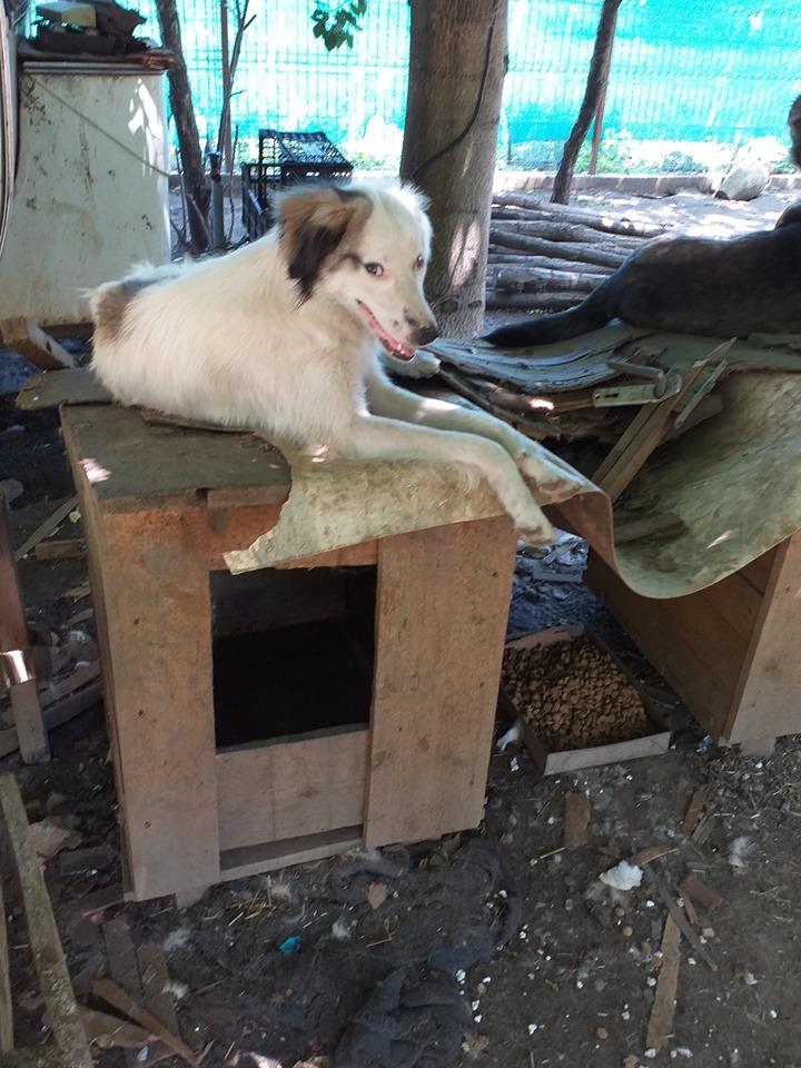BULMA, née en mai 2017, SORTIE DE MIHAILESTI EN JUILLET 2017- marrainée par les3loulous -R-SOS-SC - Page 2 62379110