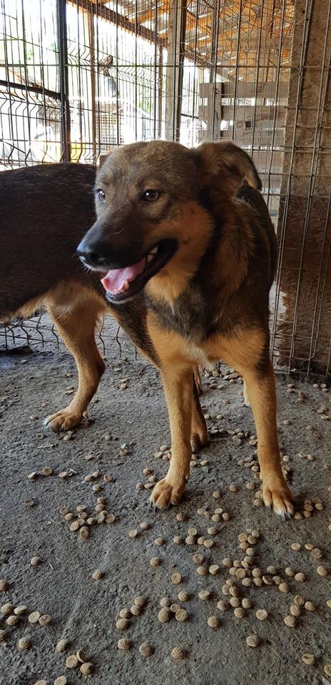 NAMI, croisé berger, soeur de Taliya et Ouzo, trouvée dans la rue en mai 2018- marrainée par Guyenne -R- 65047212