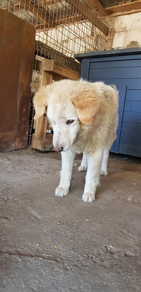 BALANUCH, mâle croisé berger sauvé de Pallady, né en 2009 parrainé par Nathalie Gamblin-Gage Coeur  Myri_Bonnie-SC-R-SOS- - Page 2 65539410