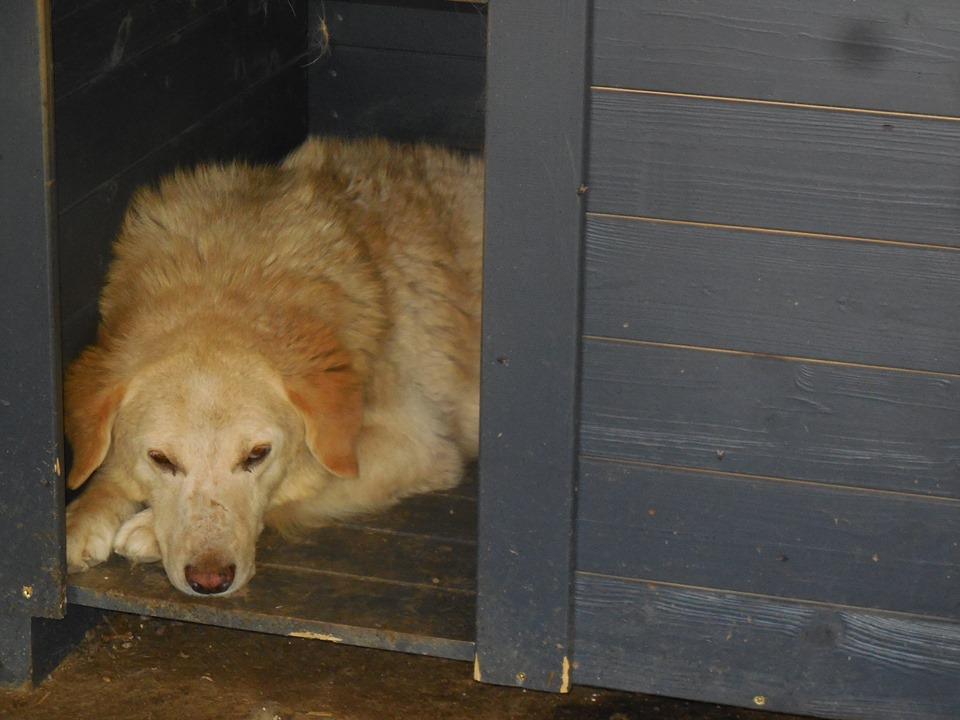 BALANUCH, mâle croisé berger sauvé de Pallady, né en 2009 parrainé par Nathalie Gamblin-Gage Coeur  Myri_Bonnie-SC-R-SOS- - Page 2 65968710
