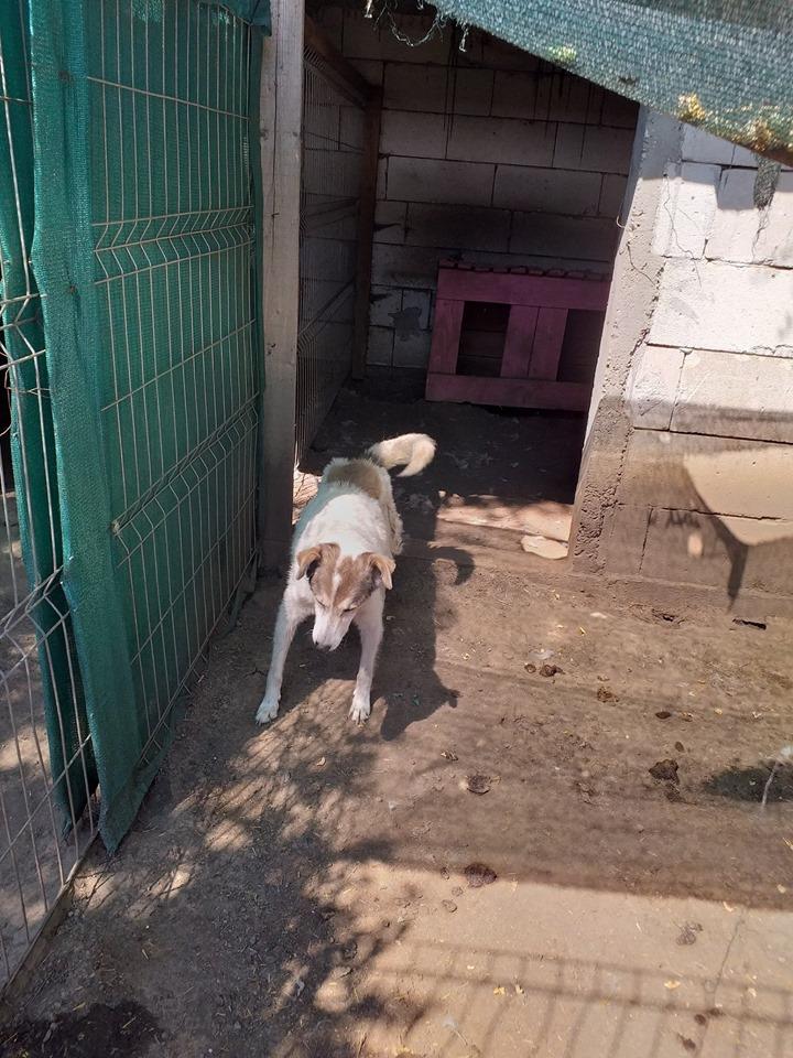BONI -  x berger  10 ans  (en box depuis 7 ans)  Asso Arche d'Eternité - Lenuta (Roumanie) 67889010