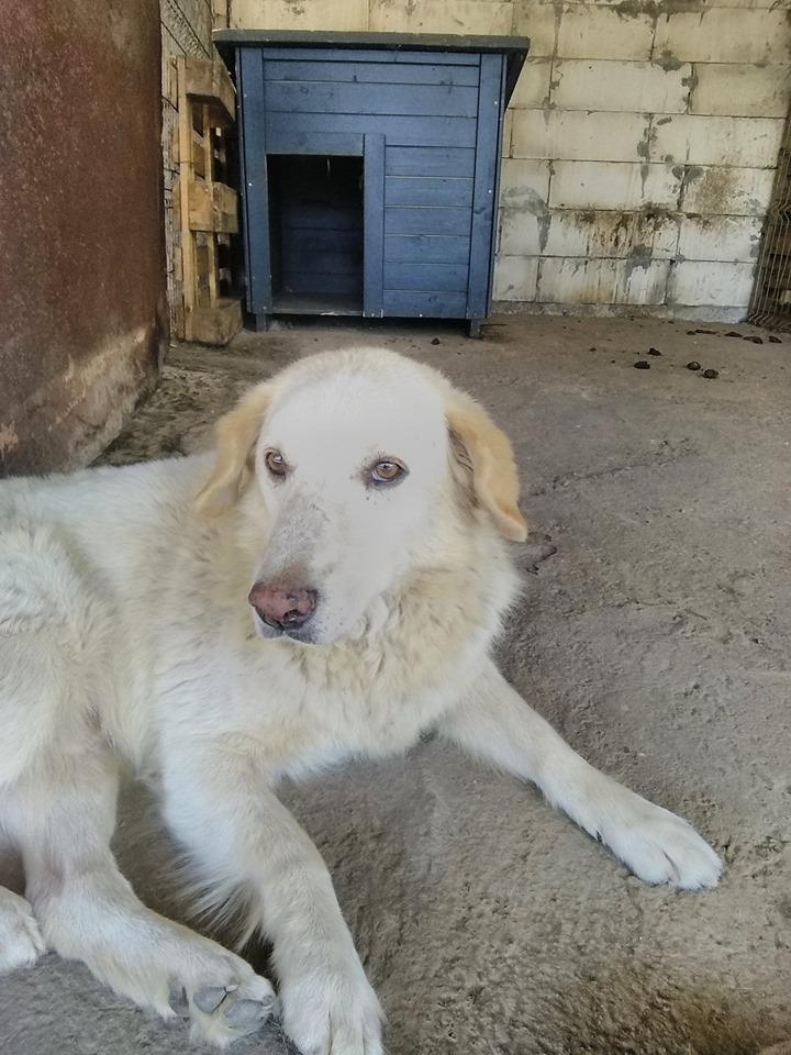 BALANUCH, mâle croisé berger sauvé de Pallady, né en 2009 parrainé par Nathalie Gamblin-Gage Coeur  Myri_Bonnie-SC-R-SOS- - Page 2 69355411