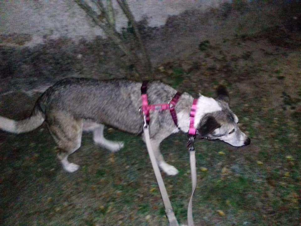 TIMIDUTZA -Taille Moyenne- NEE LE 15/09/2006 EN FA DANS LE 49 - Gage-cœur Muriel S. + Nathalie R.M - 30MA-R - Page 6 70577311