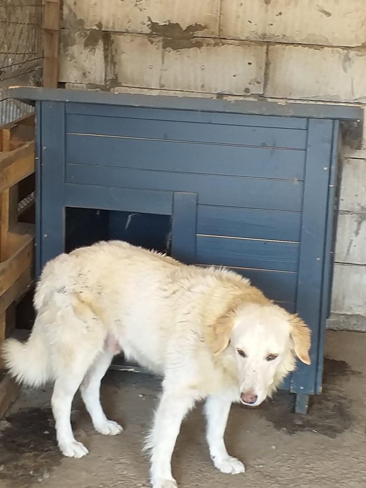 BALANUCH, mâle croisé berger sauvé de Pallady, né en 2009 parrainé par Nathalie Gamblin-Gage Coeur  Myri_Bonnie-SC-R-SOS- - Page 2 71637810