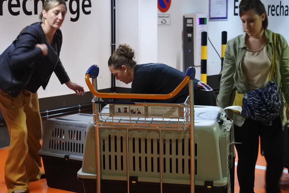 evora - EVORA, croisée berger, née le 01/09/2009 - Trouvée dans la cour d'une entreprise en 2012 - parrainée par Sky 30 - En FA dans le 44 - FB-SOS-SC-R-30MA - Page 5 71695017