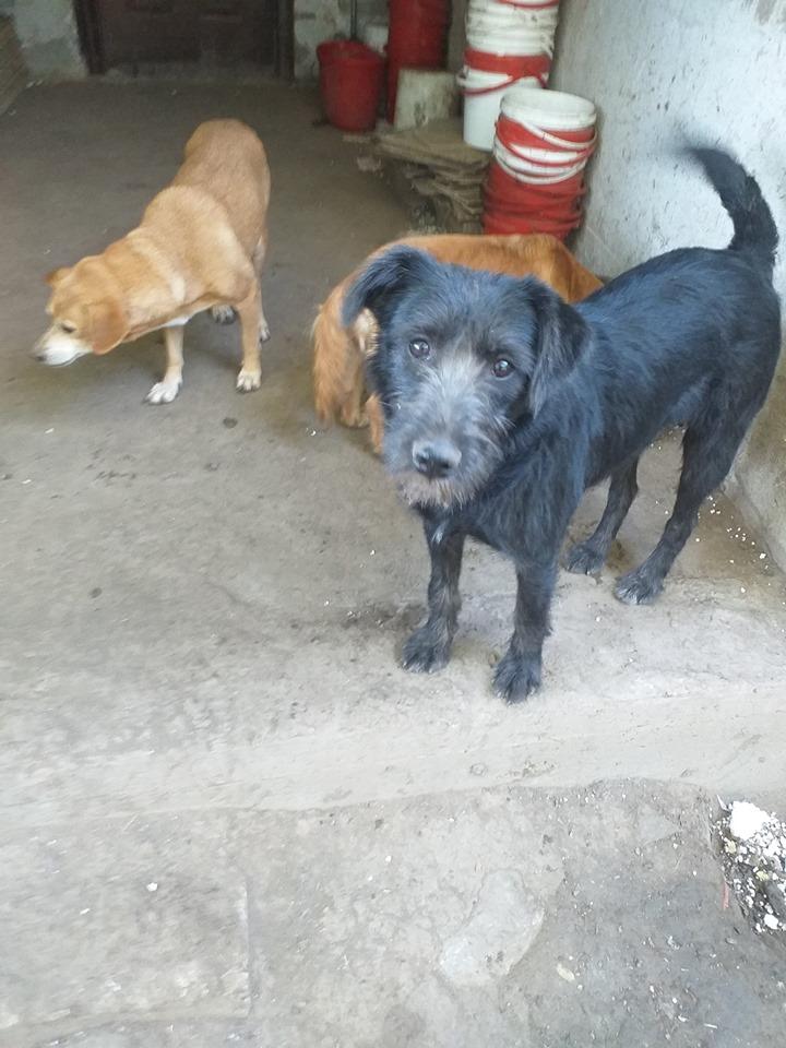 CHIROKY Petite femelle née le 13/12/2010 sauvée de l'équarrissage EN FA DANS LE 60 - parrainé par Hashleyalex-R-SOS-SC 72750511
