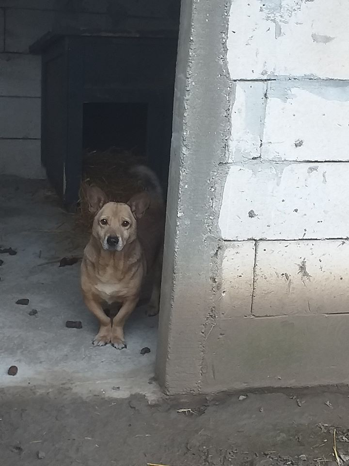 NIKKO, né en 2014 sauvé de l'équarrissage en décembre 2017-marrainée par Célia78 - R-SC-SOS 74414811