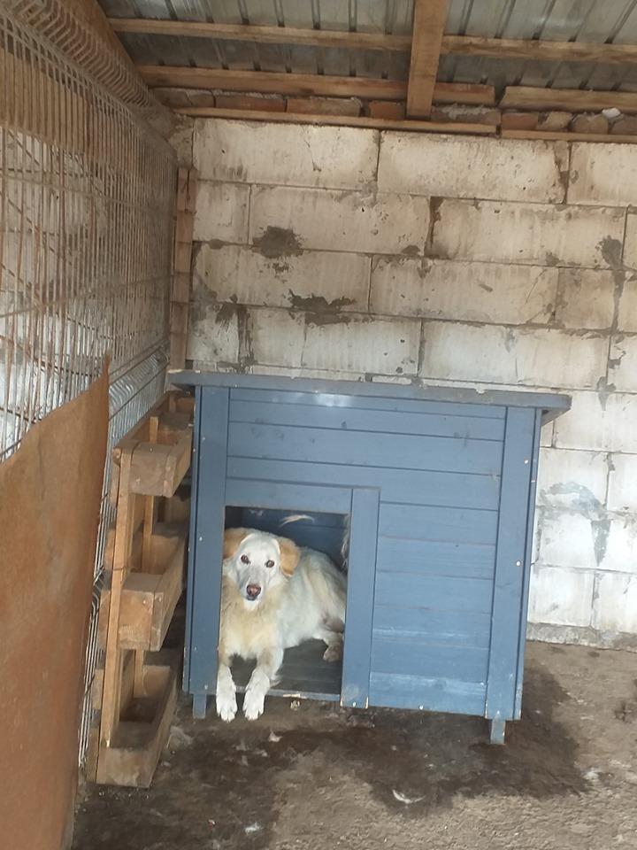 BALANUCH, mâle croisé berger sauvé de Pallady, né en 2009 parrainé par Nathalie Gamblin-Gage Coeur  Myri_Bonnie-SC-R-SOS- - Page 2 74620812