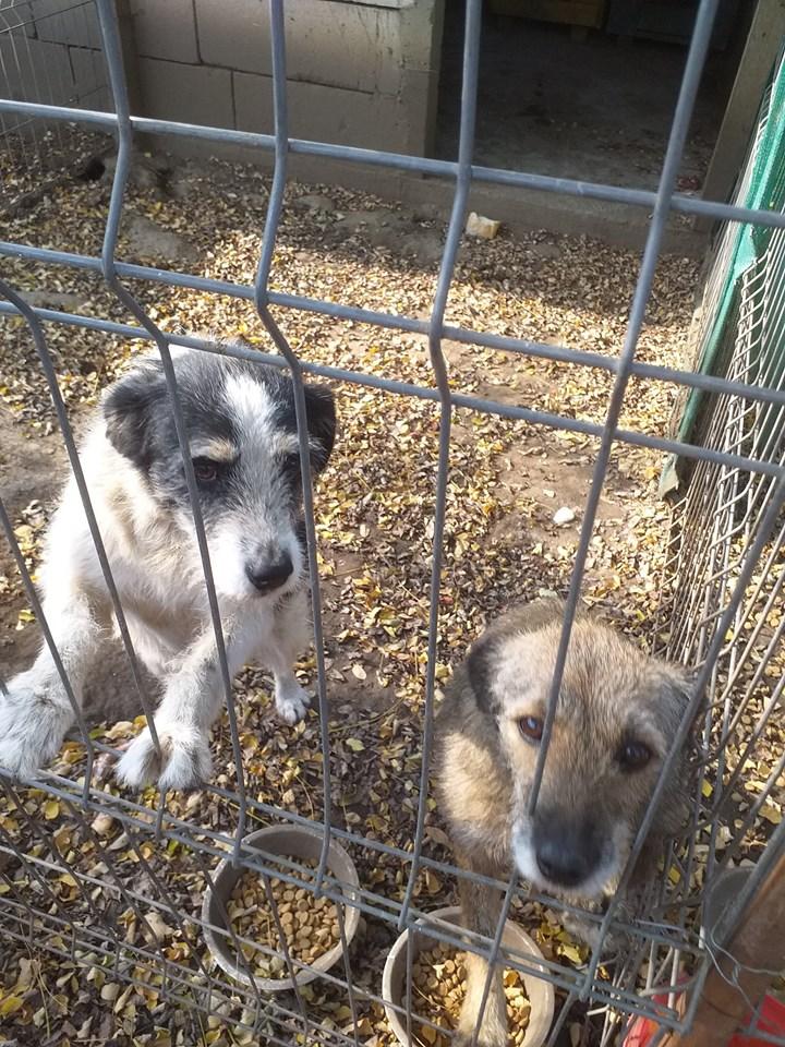 MACUMBA - griffon 8 ans  (4 ans de refuge) -Asso Arche d'Eternité (Roumanie) 75339410