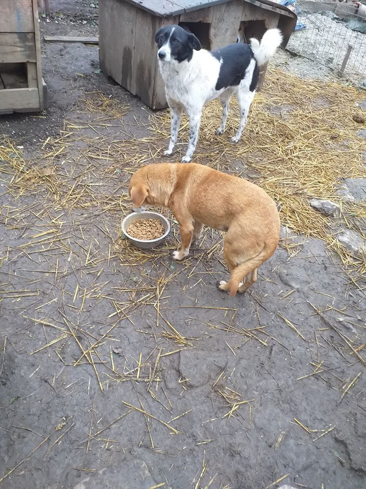 CHIROKY Petite femelle née le 13/12/2010 sauvée de l'équarrissage EN FA DANS LE 60 - parrainé par Hashleyalex-R-SOS-SC 75643510