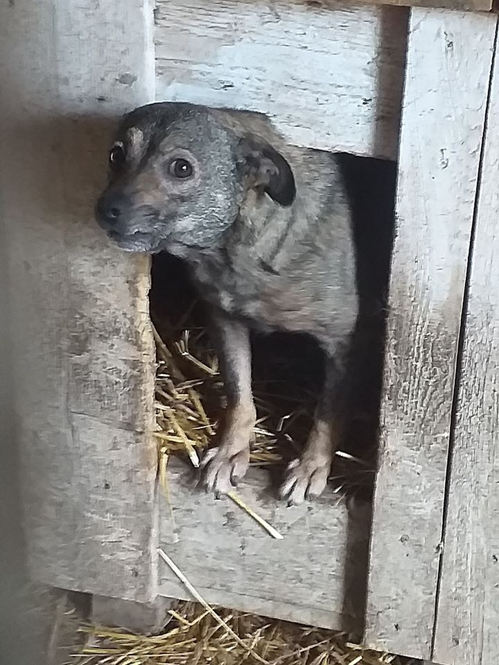Takoma -femelle née en 2015 - jumelle de Koria  - sortie de l'équarrissage le 11 mars 2017- Marrainée par Skara-SC-SOS 76652810