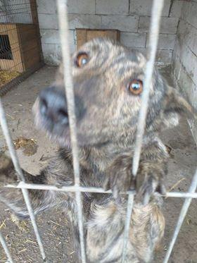 ARRY, mâle né en 2013, récupéré suite à l'avis d'expulsion du refuge de Radu- marrainé par Bouffy-R-SC-SOS 77089310