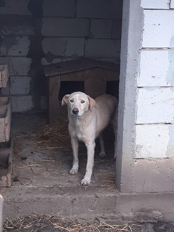 BOX (trois) , croisé labrador, né en 2007 -  Parrainée par Samie + Gage-coeur : (1) Samie -R-F-SOS-SC- - Page 4 77103110