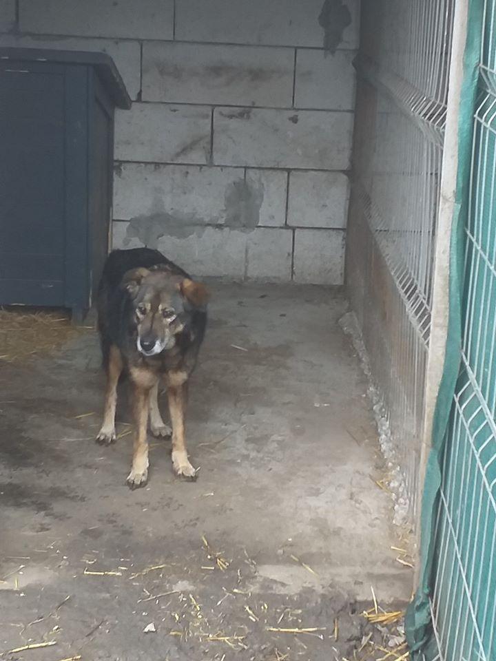 NENIA - Femelle - née en 2009   -Parrainée par Yemtsi et Nanou R-SOS-SC - Page 4 77273410