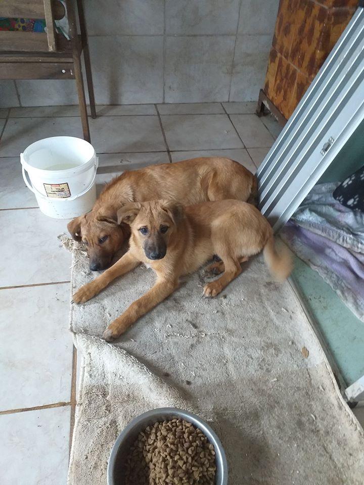 choupy - CHOUPY mâle né en Juin 2019 portée de 5 trouvés par Lénuta en septembre 2019- marrainé par Réglisse -R- 77417711
