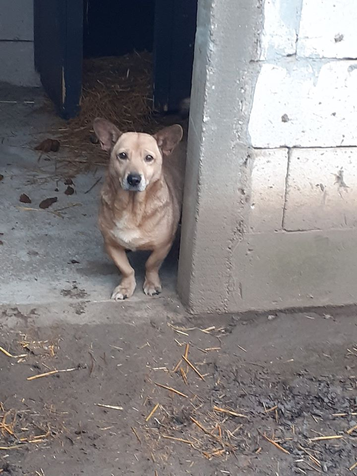 NIKKO, né en 2014 sauvé de l'équarrissage en décembre 2017-marrainée par Célia78 - R-SC-SOS 78701310