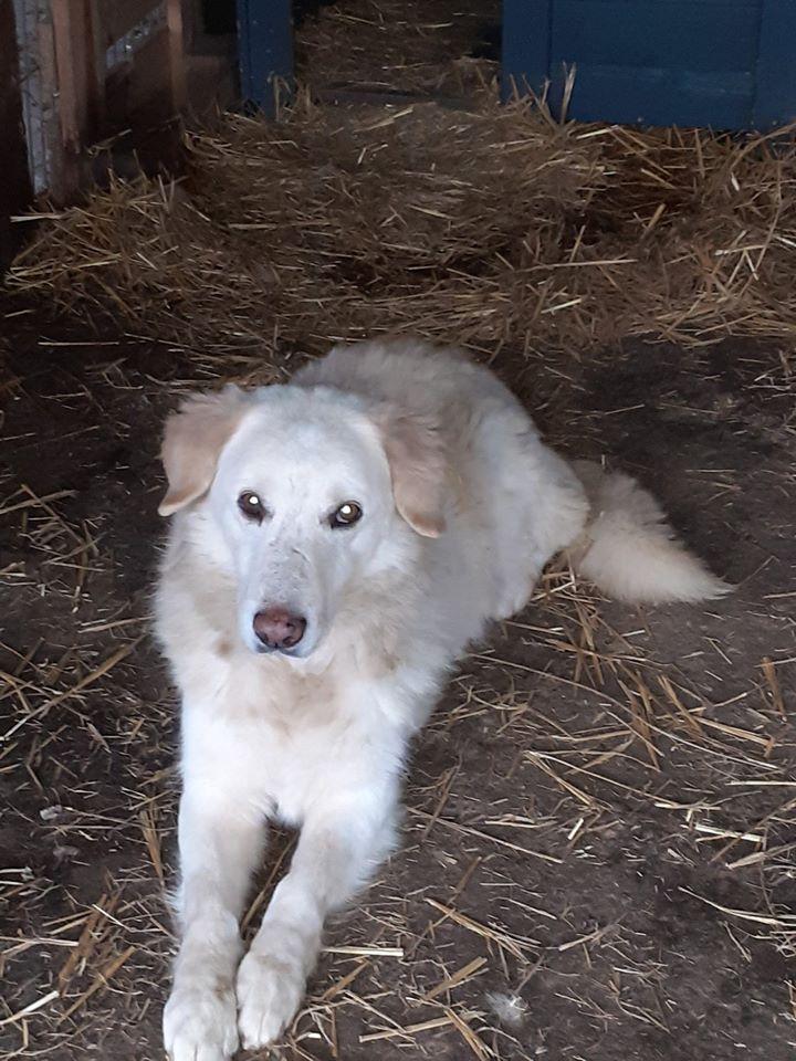 BALANUCH, mâle croisé berger sauvé de Pallady, né en 2009 parrainé par Nathalie Gamblin-Gage Coeur  Myri_Bonnie-SC-R-SOS- - Page 2 79288610