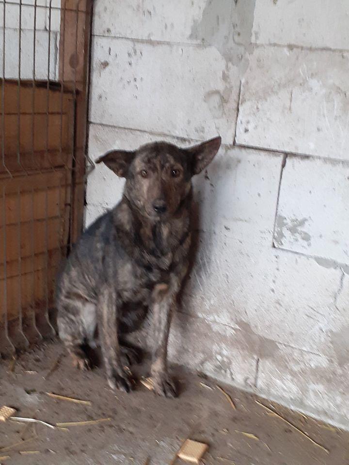 ARRY, mâle né en 2013, récupéré suite à l'avis d'expulsion du refuge de Radu- marrainé par Bouffy-R-SC-SOS 79545911