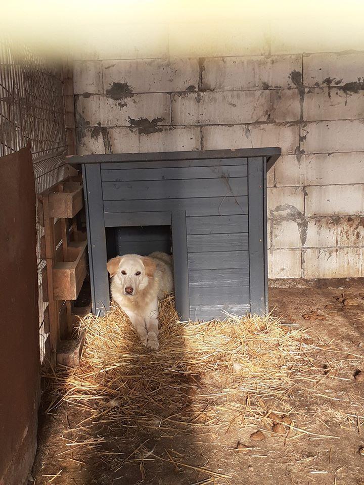 BALANUCH, mâle croisé berger sauvé de Pallady, né en 2009 parrainé par Nathalie Gamblin-Gage Coeur  Myri_Bonnie-SC-R-SOS- - Page 2 80026610