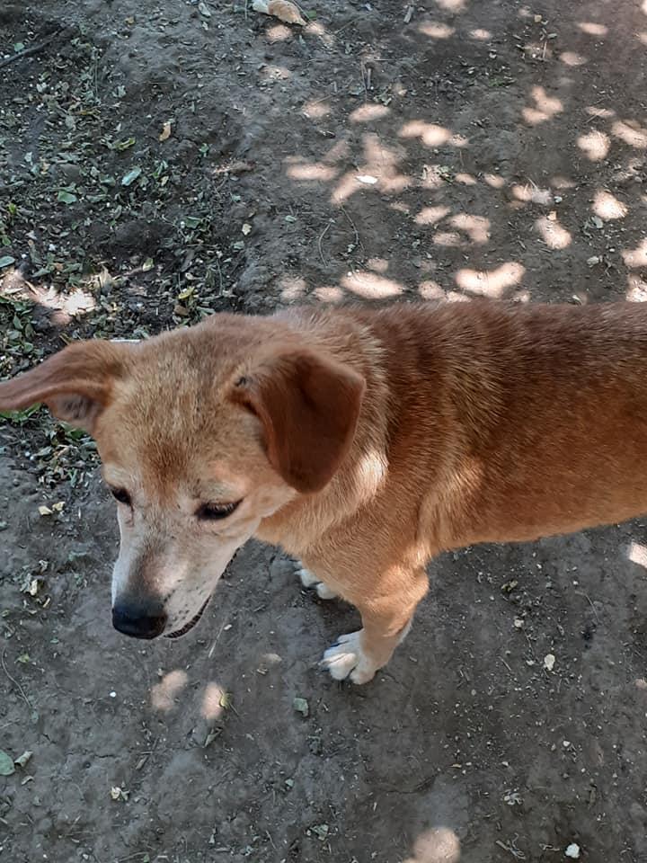 Chiroky - femelle née en 2011 sauvée de l'équarrissage - parrainé par Hashleyalex-R-SOS-SC 80252210