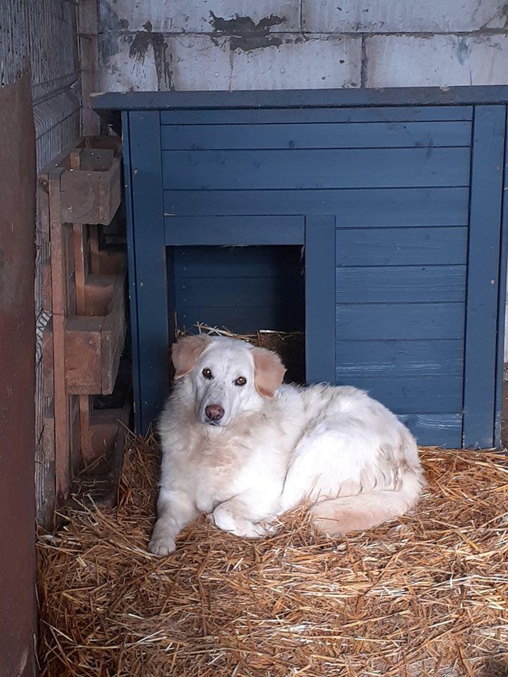 BALANUCH, mâle croisé berger sauvé de Pallady, né en 2009 parrainé par Nathalie Gamblin-Gage Coeur  Myri_Bonnie-SC-R-SOS- - Page 2 81540610
