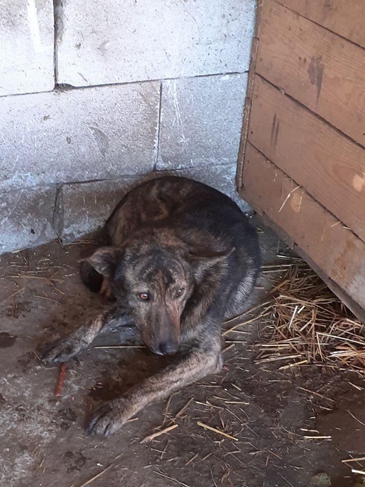 ARRY, mâle né en 2013, récupéré suite à l'avis d'expulsion du refuge de Radu- marrainé par Bouffy-R-SC-SOS 82143410