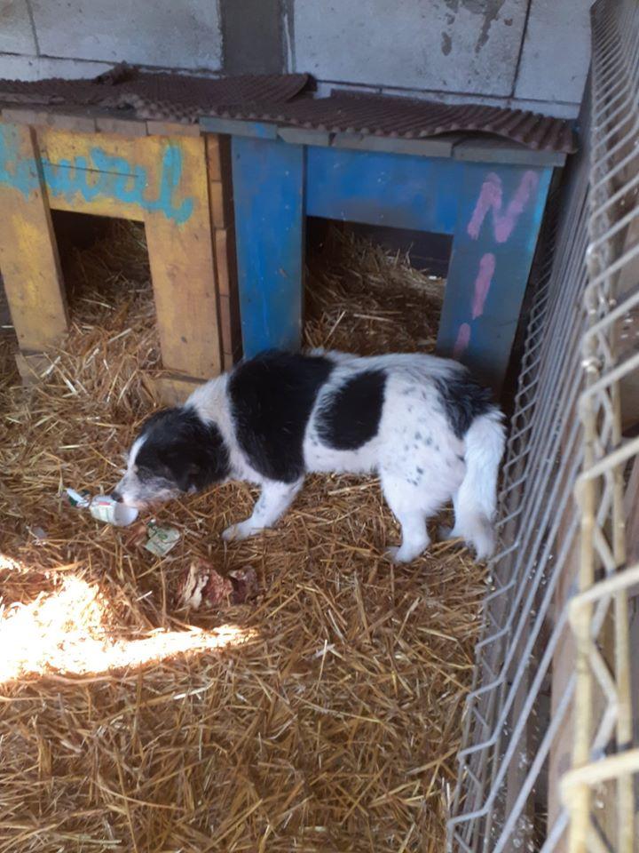 MACUMBA -type petit griffon née en 2010 - marrainée par Yemtsi - R- SOS-SC - Page 4 82314810