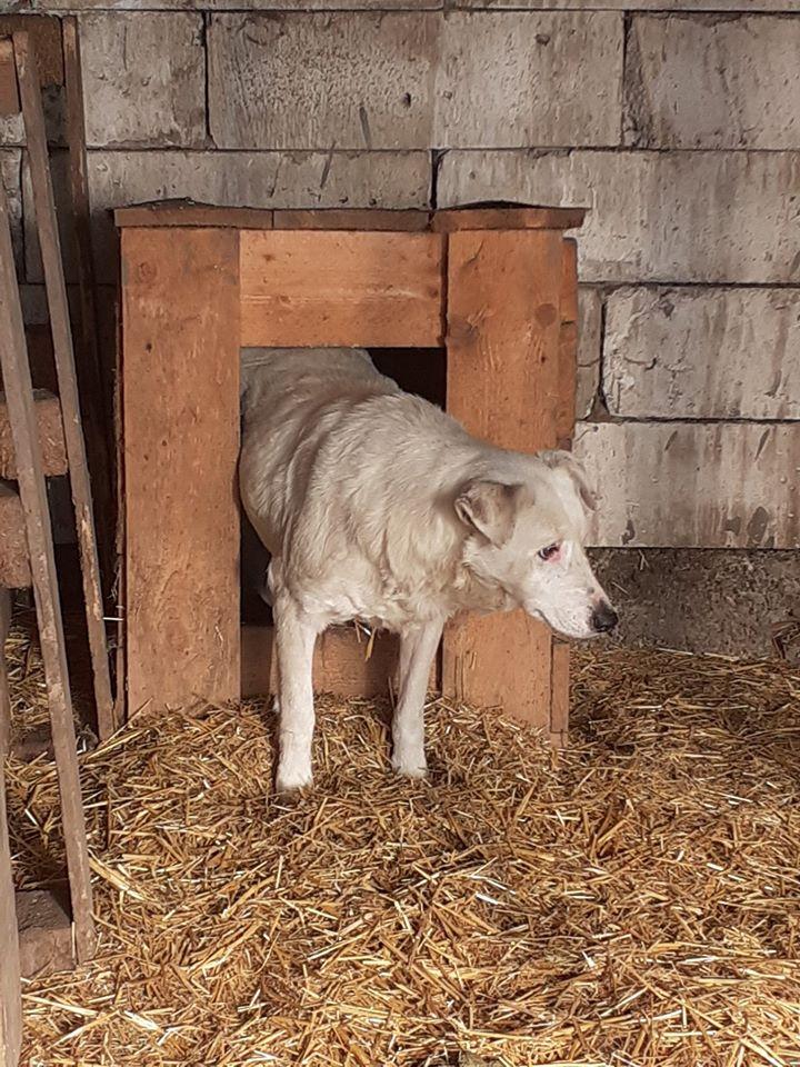 DULCE - Magnifique femelle Blanche - née en 2009 - Parrainée par Samie -SOS-FB-R-SC-  - Page 3 82688210