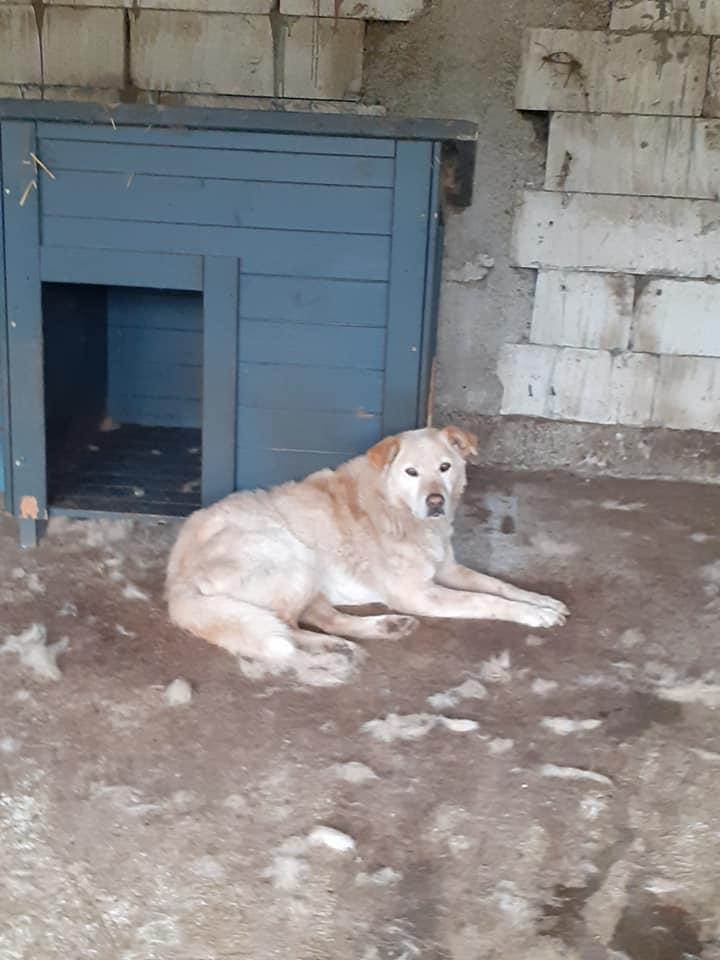 BALANUCH, mâle croisé berger sauvé de Pallady, né en 2009 parrainé par Nathalie G. -Gage Coeur  Myri_Bonnie-SC-R-SOS- - Page 3 83173410