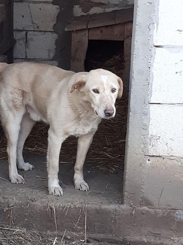 BOX (trois) , croisé labrador, né en 2007 -  Parrainée par Samie + Gage-coeur : (1) Samie -R-F-SOS-SC- - Page 4 83623510